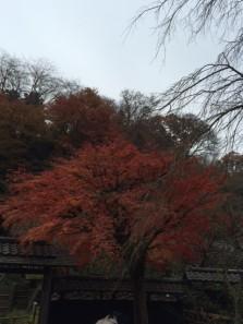 018東慶寺3