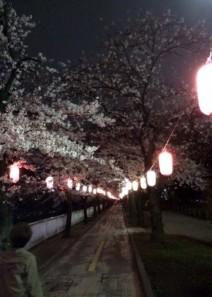 005 桜のトンネル1