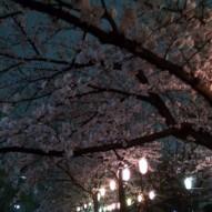 006 桜のトンネル2