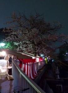 008 桜のトンネル4